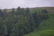 Northwest corner of coniferous woodland at Cnoc na h-lolaire