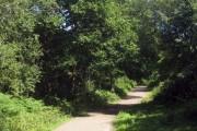 Abbot's Wood