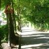 Portnalls Road - Steep Hill 1:8
