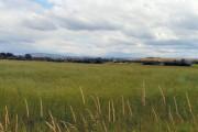 Farmland at Littlemoss