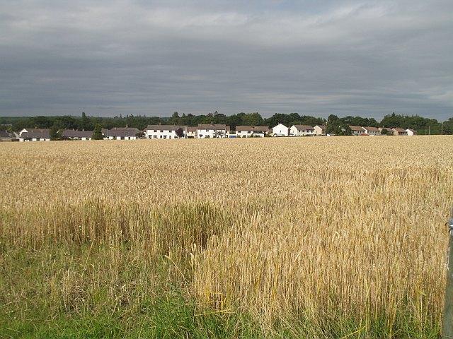 Wheat field, Scone