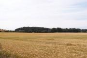 View Towards Sandieland Wood