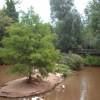 Paignton Zoo Flamingo Island with foot bridge