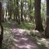 Wye Valley Walk through Paget's Wood nature reserve