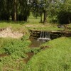 Watercress growing in former mill race at Whittlebury Farm