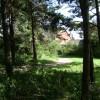 Pine wood, Warwick Gates estate
