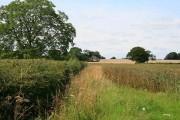 Fields near Sheepy Magna