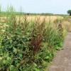 Vegetation on verge of the track to Wilstone reservoir