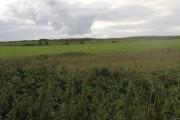 View over farmland south of Mill Road, Kingsland, Holyhead