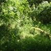 Moretonhampstead: overgrown footpath