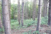 Hellhole Wood