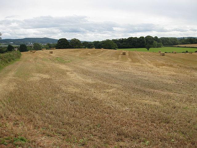 Harvest in