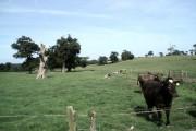 Nunwell Farm