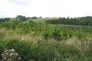 Skerningham Community Woodland