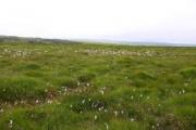 Bursdon Moor