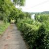 Lane to Altbough