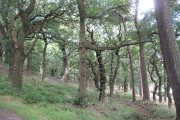 Woodland, Callendar Park