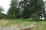 Replanted woodland, Woodbrae