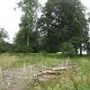 Replanted woodland, Woodbrae