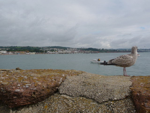 Paignton: gull on harbour wall