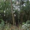 Woodland besideTrans Pennine Trail