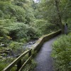 Riverside Path, Colinton dell