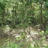 Woodland, Dalreoch