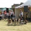 Fair on the Yare - Dunstan Hall Harrier Hounds