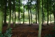 Surrounding woodland