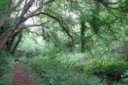 Path through Damgate Wood