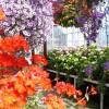 Winter Gardens, Duthie Park