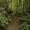 Bridleway in Folly Wood