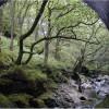 Old Bridge, Glen Kinglas, Scotland