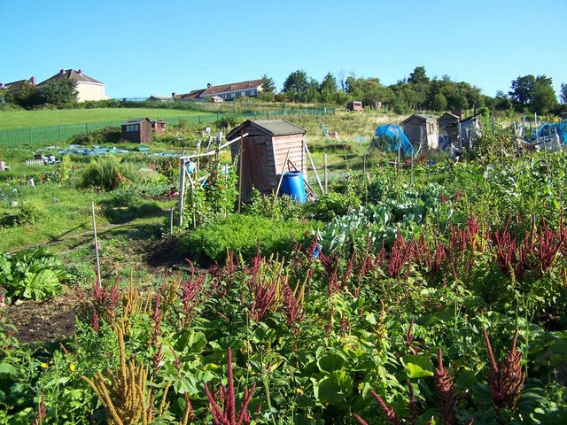 Allotments Off Sir John's Lane