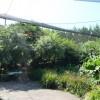 Paignton : Paignton Zoo, Brook-Side Aviary