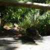 Paignton : Paignton Zoo, Wetlands Waterfowl