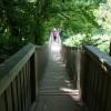 Paignton : Paignton Zoo, Wobby Bridge in Lemur Wood