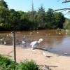 Paignton : Paignton Zoo Lake