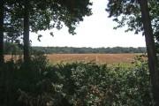 Farmland adjacent to Shrawley Wood
