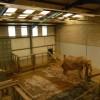 Paignton : Paignton Zoo, Elephant House