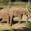 Paignton : Paignton Zoo, Elephants