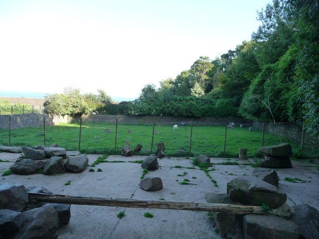 Paignton : Paignton Zoo, Goats
