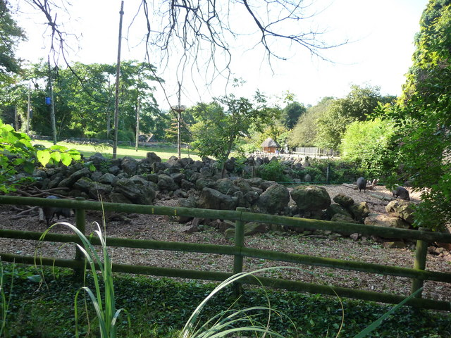 Paignton : Paignton Zoo, Peccaries