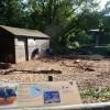 Paignton : Paignton Zoo, Peccary Enclosure
