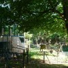 Paignton : Paignton Zoo, Monkey Enclosure