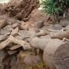 Paignton : Paignton Zoo, Desert Zone
