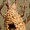 Paignton : Paignton Zoo, Desert Zone & Bird Nest