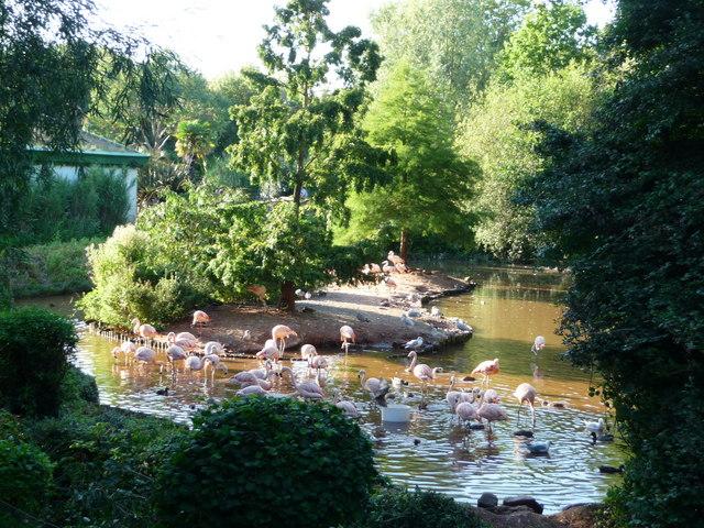 Paignton : Paignton Zoo, Flamingo Lake