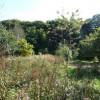 North Devon : The Wild Flower Garden