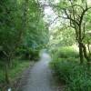 North Devon : The Wild Flower Garden & Path